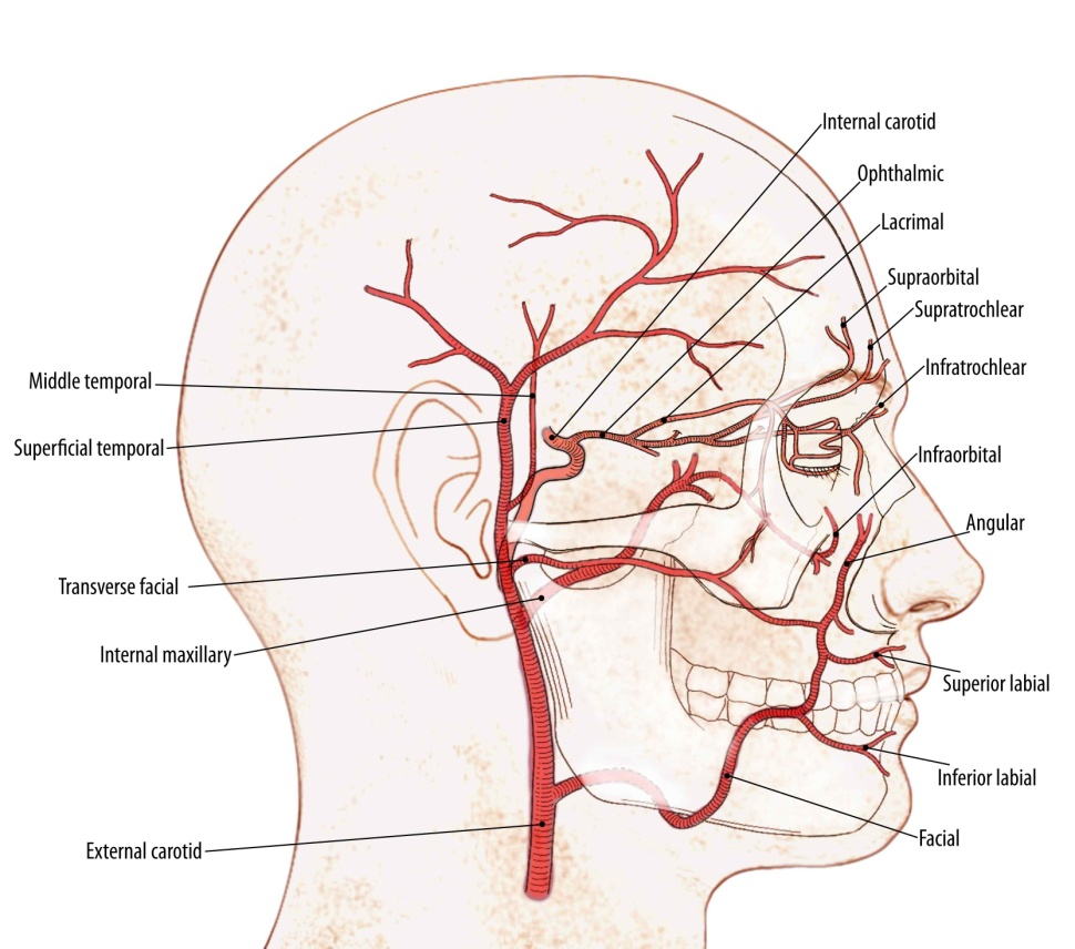 Nasal Vascular Anatomy – CPR PODCAST